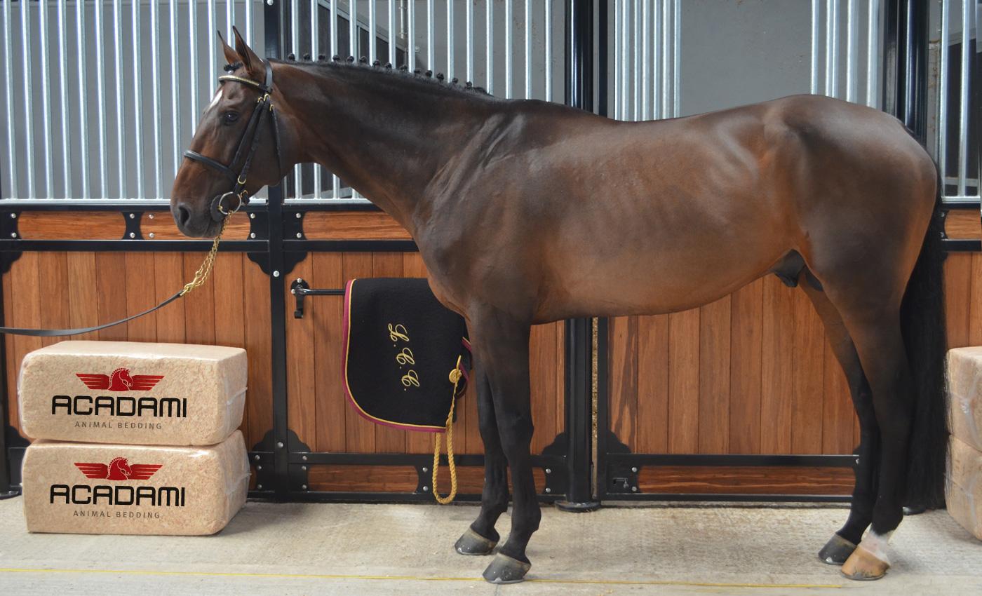 Horse with Acadami