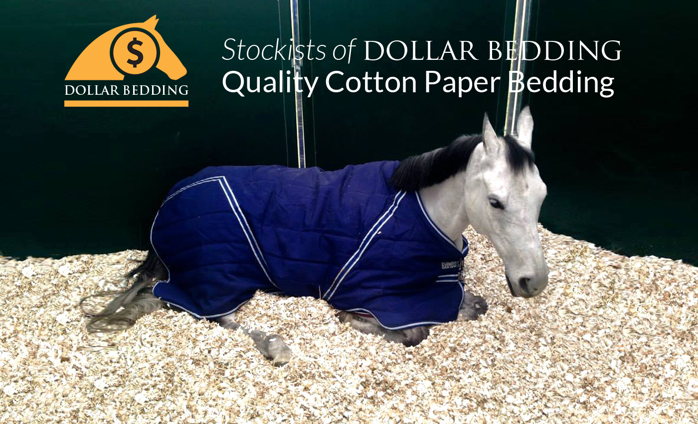 Dollar Paper Bedding